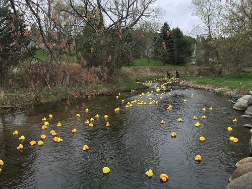 Spring Walk & Duck Race