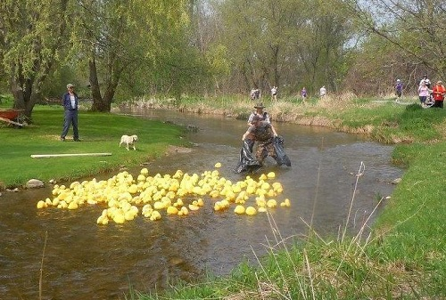 Spring Walk & Duck Race